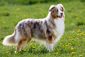 DOG 01 KH0027 01