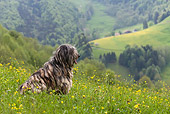 DOG 01 KH0034 01