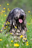 DOG 01 KH0035 01