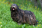 DOG 01 KH0036 01