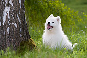 DOG 01 KH0038 01