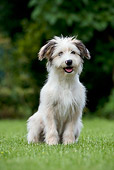 DOG 01 KH0039 01