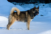 DOG 01 KH0048 01