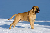 DOG 01 KH0052 01