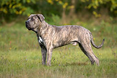 DOG 01 KH0055 01