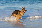 DOG 01 KH0067 01
