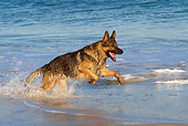 DOG 01 KH0068 01