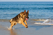 DOG 01 KH0069 01
