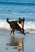 DOG 01 KH0071 01