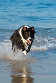 DOG 01 KH0072 01