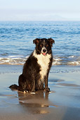 DOG 01 KH0074 01