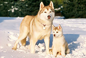 DOG 01 LS0001 01