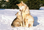 DOG 01 LS0002 01