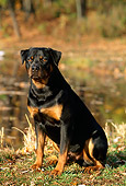 DOG 01 LS0020 01
