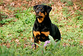 DOG 01 LS0022 01