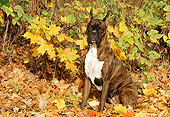 DOG 01 LS0023 01