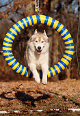 DOG 01 LS0024 01
