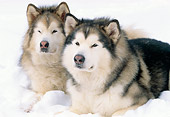DOG 01 LS0026 01