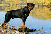 DOG 01 LS0027 01
