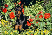 DOG 01 LS0028 01