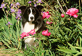 DOG 01 LS0029 01