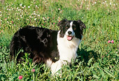 DOG 01 LS0030 01