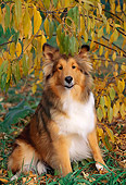 DOG 01 LS0041 01