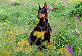 DOG 01 LS0043 01