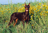 DOG 01 LS0044 01