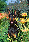 DOG 01 LS0045 01