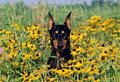 DOG 01 LS0047 01