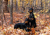 DOG 01 LS0051 01