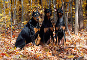 DOG 01 LS0052 01