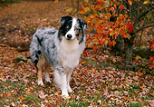 DOG 01 LS0054 01