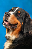 DOG 01 MQ0001 01