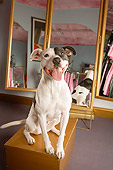 DOG 01 MQ0013 01