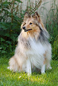 DOG 01 NR0036 01