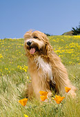 DOG 01 RC0005 01