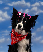 DOG 01 RK0009 01