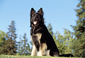 DOG 01 RK0025 06