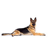 DOG 01 RK0032 02