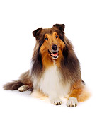 DOG 01 RK0052 02