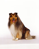 DOG 01 RK0061 03