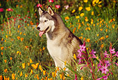 DOG 01 RK0065 07