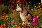 DOG 01 RK0067 15