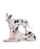 DOG 01 RK0080 04