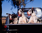 DOG 01 RK0083 02