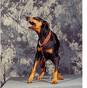 DOG 01 RK0087 24