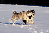 DOG 01 RK0092 06