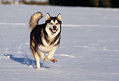 DOG 01 RK0102 39